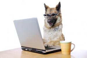 Onlinenutzungsverhalten